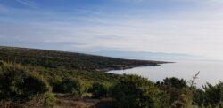 Sauen 2021 in Kroatien auf eine Insel