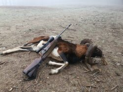 Jungjäger Jagdreisen die Leistbar sind