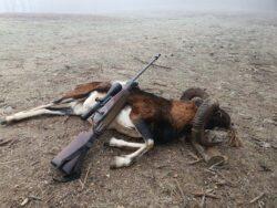 Widder Jagd in der Slowakei