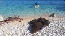 Jagdwoche auf Schwarzwild  in Kroatien am Meer von Mo - So