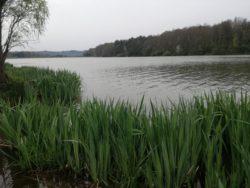 Fischen, Ungarn, Bernsteinsee