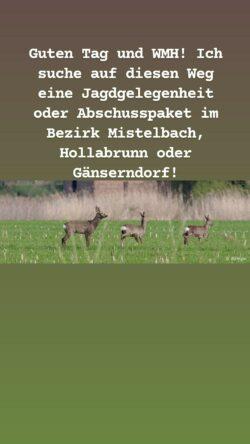 Guten Tag und WMH! Ich suche auf diesen Weg eine Jagdgelegenheit oder Abschusspaket im Bezirk Mistelbach, Hollabrunn oder Gänserndorf!