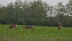 Jagdreise in Süd-Ungarn